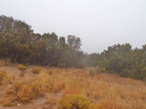 NM Vacant Land Wooded Off-Grid : Tijeras : Bernalillo County : New Mexico