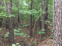 110 Acre Hunting & Recreation Tract : Star : Rankin County : Mississippi