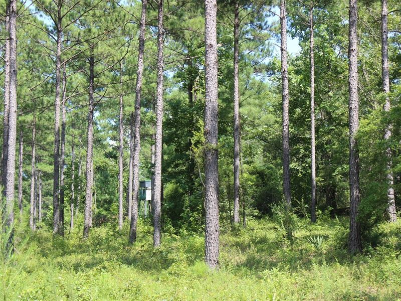 Hunting Tract With Good Timber : Butler : Taylor County : Georgia