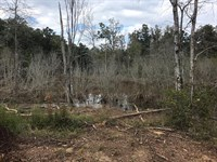 29 Acres With Great Duck Pond : Barnesville : Lamar County : Georgia