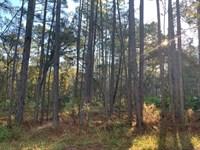 1 Acre Buildable High And Dry Lot : Weeki Wachee : Hernando County : Florida
