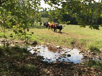 665-Acre Ozarks Cattle Farm Willow : Willow Springs : Texas County : Missouri
