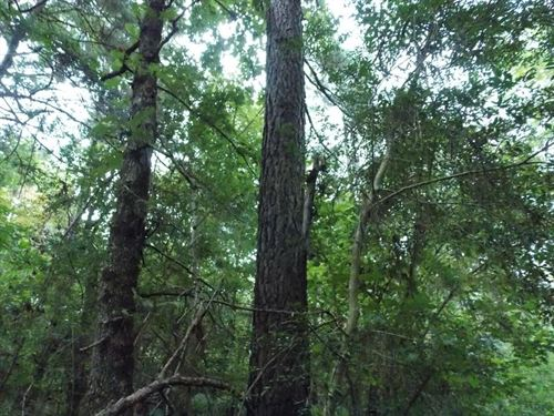 Land 33.9 Acres Franklin County : Bude : Franklin County : Mississippi