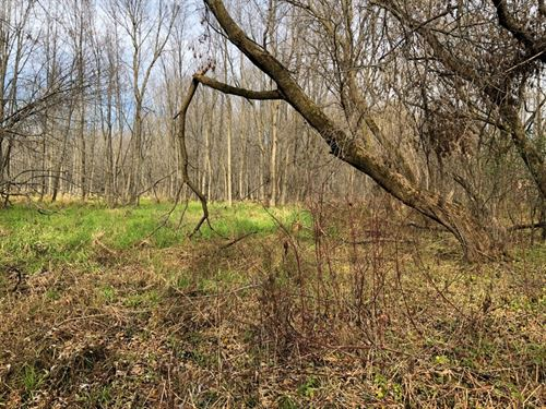 Heavily Wooded Parcel Sheboygan : Oostburg : Sheboygan County : Wisconsin