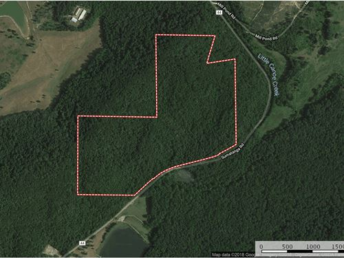 92 Acres Joins Camp Sumatanga : Gallant : Saint Clair County : Alabama