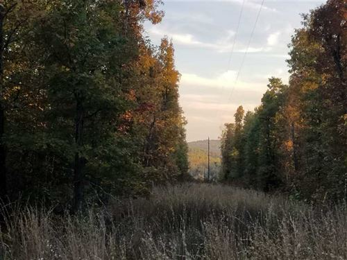 Private 40 Acre Mixed Timber Tract : Norwood : Douglas County : Missouri