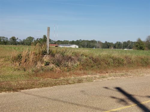 4 Acres Hartzog Rd, Wicksburg : Wicksburg : Houston County : Alabama