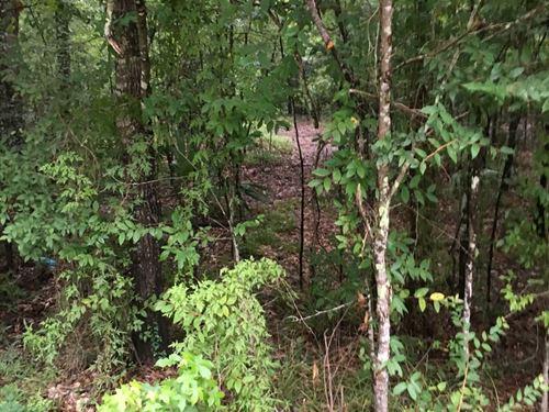 Now Reduced, Hardwood Bottom Swamp : White Hall : Livingston Parish : Louisiana