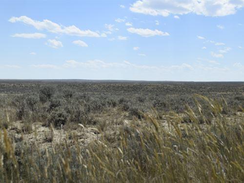 Campsite On Cottonwood : Bridger : Carbon County : Montana