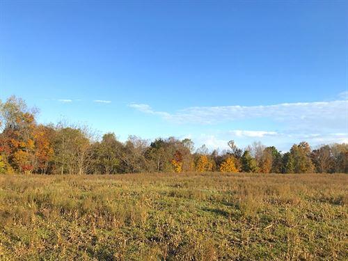 Patton Mills Rd, 56 Acres : Stockport : Washington County : Ohio
