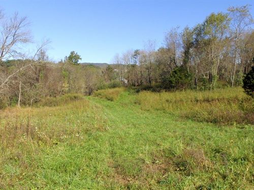 52 Acres With Creek And Pond : Roanoke : Virginia