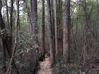 Keeton Tract : Baldwyn : Prentiss County : Mississippi