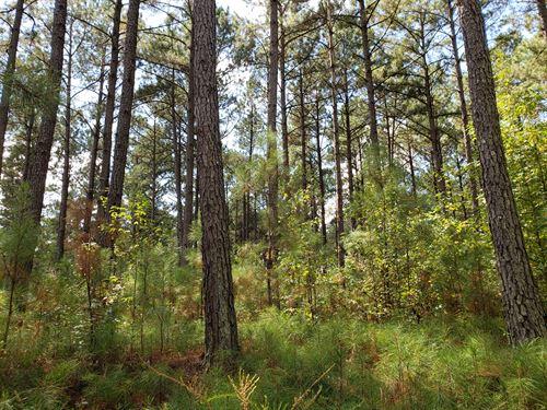Little Tobesofkee Creek : Forsyth : Monroe County : Georgia