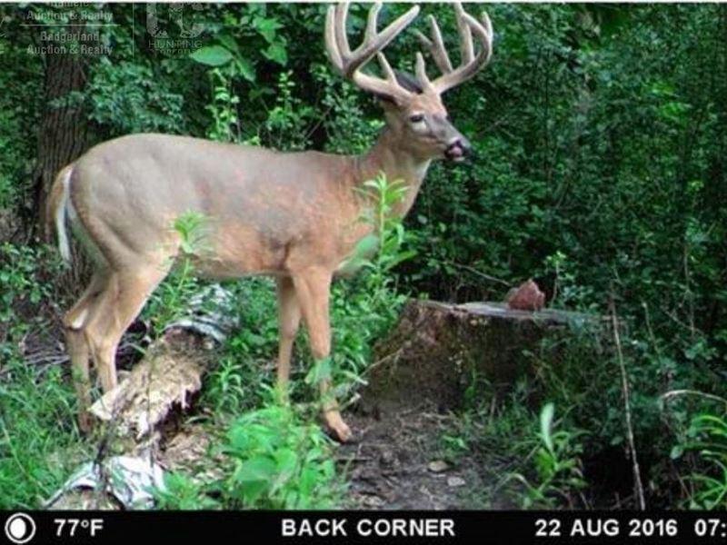 Wooded Acreage, Pasture / Tillable : Prairie Du Sac : Columbia County : Wisconsin