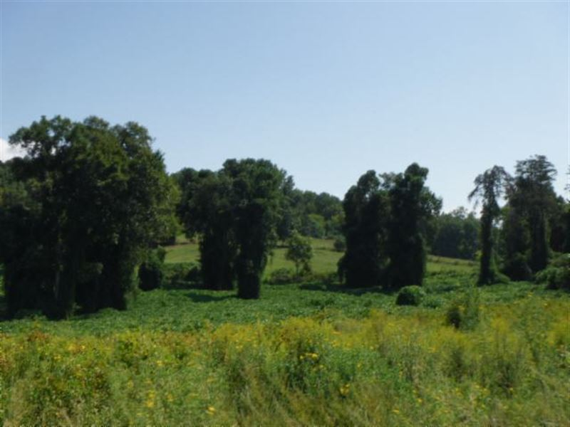 6.16 Ac Open Pasture, Level To Roll : Sparta : White County : Tennessee