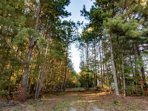 3 Ac Wooded Lot With Mountain Views : Campobello : Spartanburg County : South Carolina