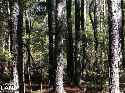 Dog Creek 472 : Calhoun City : Calhoun County : Mississippi