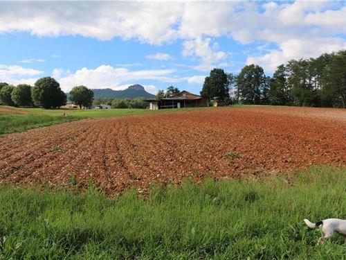 Farm Land For Sale in Pinnacle NC : Pinnacle : Surry County : North Carolina