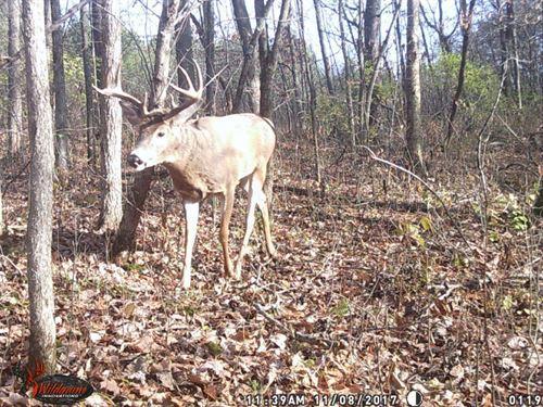 Whitetail Deer Hunting Land : Readstown : Vernon County : Wisconsin