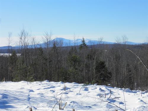 Timberland in Mount Chase, Maine : Mount Chase : Penobscot County : Maine
