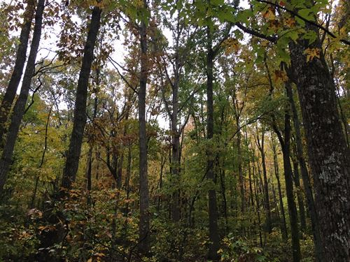 20+/- Ac Mountain Tract In Ellijay : Ellijay : Gilmer County : Georgia
