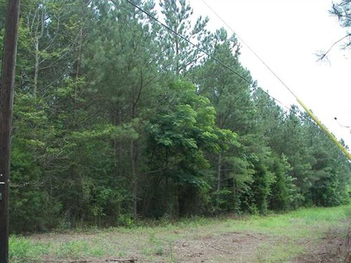 617 Acres of Prime Hunting Land : Hokes Bluff : Etowah County : Alabama