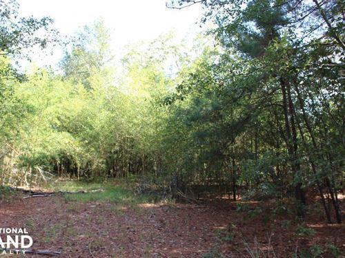 Stapleton Hunting Tract : Stapleton : Jefferson County : Georgia