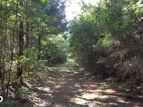 160 Acre Hunter's Paradise/Timber : Livingston : Polk County : Texas