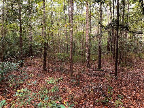 34 Acres For Sale Malvern, Alabama : Malvern : Geneva County : Alabama