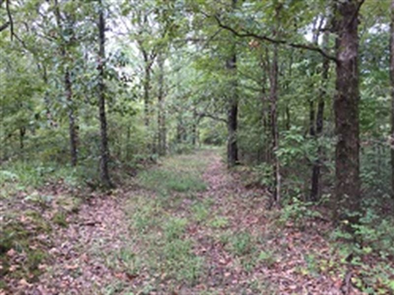 Hunting & Recreational Land : Cherry Valley : Cross County : Arkansas