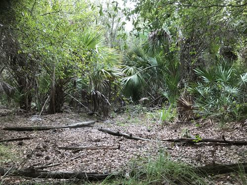 Two Adjoining Lots Camp/Investment : North Port : Sarasota County : Florida