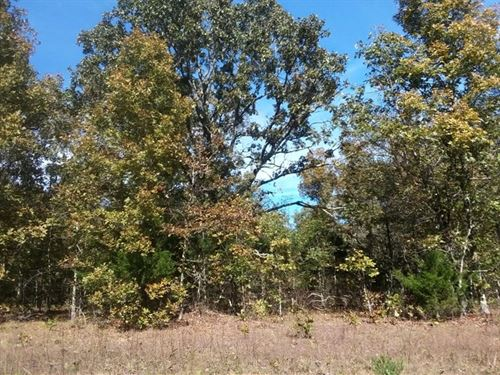 36-Acres Willow Springs, Missouri : Willow Springs : Howell County : Missouri