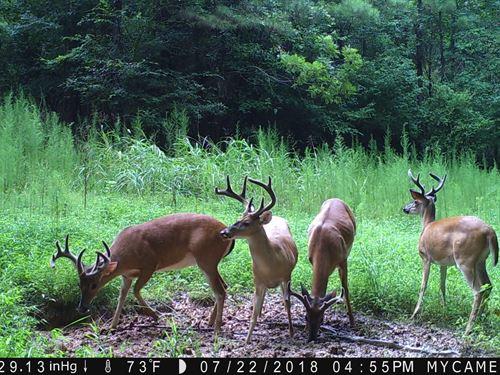 Hickory Grove Road Tract : Hickory Grove : Cherokee County : South Carolina