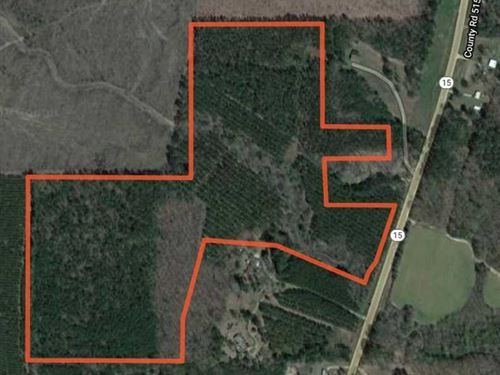 77.8 Acres of Clear Cut Timber : Houston : Chickasaw County : Mississippi
