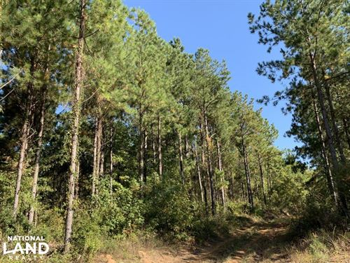 Highway 69 Campbell Tract : Campbell : Clarke County : Alabama