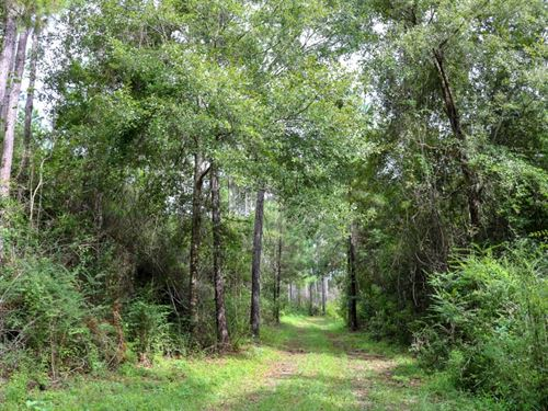 144 Acres In Lamar County In Lumber : Lumberton : Lamar County : Mississippi