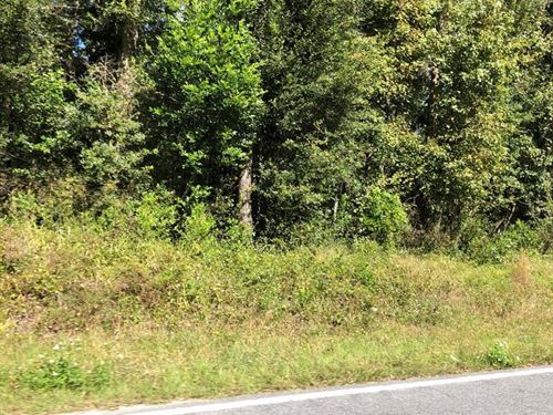 Multiple Lots For Sale 776630 : Old Town : Dixie County : Florida
