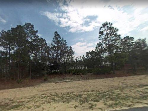 Citrus County, Fl $75,000 : Citrus Springs : Citrus County : Florida