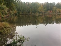 14 Wooded Acres Chester Co,Tn Lake : Henderson : Chester County : Tennessee