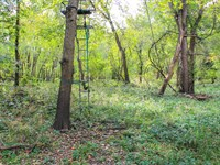 Christian County Hunting Property : Taylorville : Christian County : Illinois
