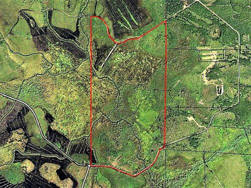 201 Acre Timber Tract : Waycross : Ware County : Georgia