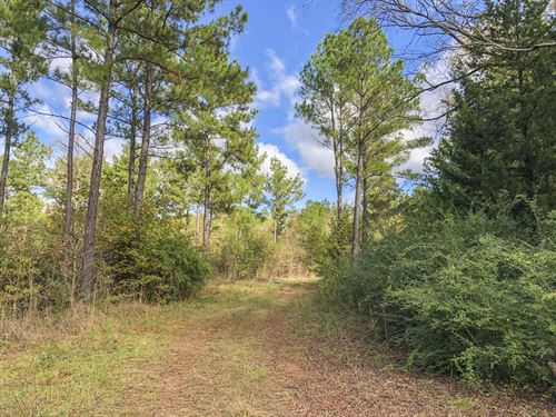 35 Acres Cr 4227 : Jacksonville : Cherokee County : Texas