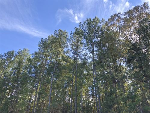 61 Acres Hwy 204 : Jacksonville : Cherokee County : Texas