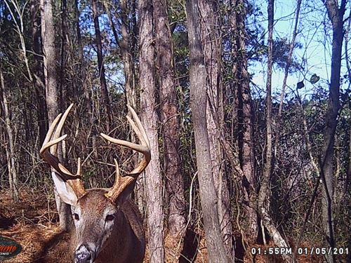 South Carolina Hunting Timberland : Bennettsville : Marlboro County : South Carolina