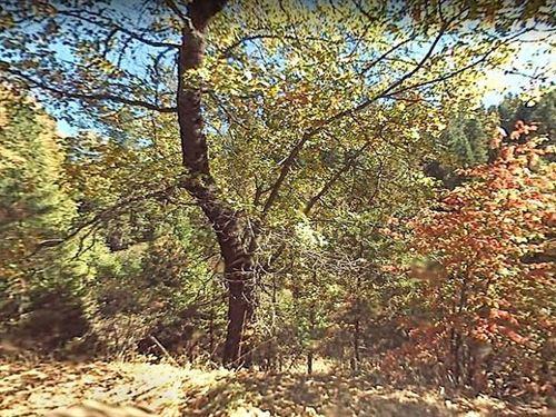 Nicely Wooded In Calaveras County : Arnold : Calaveras County : California