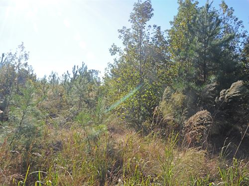 North Carolina Hunting Land : Bolivia : Brunswick County : North Carolina