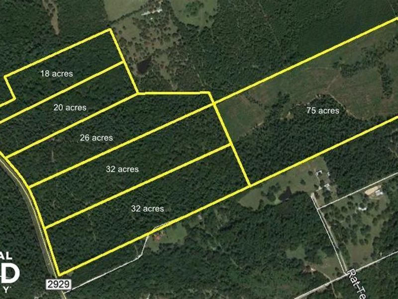 Large Wooded Ranchettes / Homesites : Huntsville : Walker County : Texas