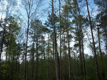 155 Acres : Minter : Dallas County : Alabama