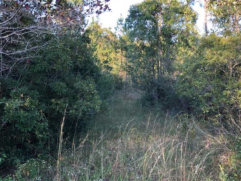 9 Ac, Hunting Land in Stone CO : Perkinston : Stone County : Mississippi