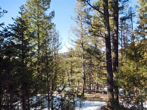 18 Acres Wrapped In Government Land : Cripple Creek : Teller County : Colorado